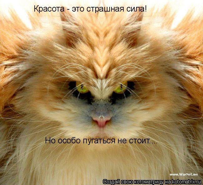 Котоматрица: Красота - это страшная сила! Но особо пугаться не стоит....