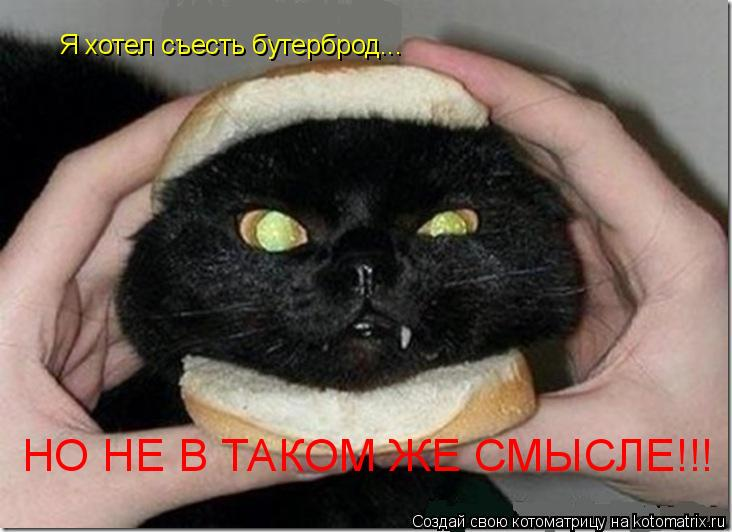 Котоматрица: Я хотел съесть бутерброд... НО НЕ В ТАКОМ ЖЕ СМЫСЛЕ!!!