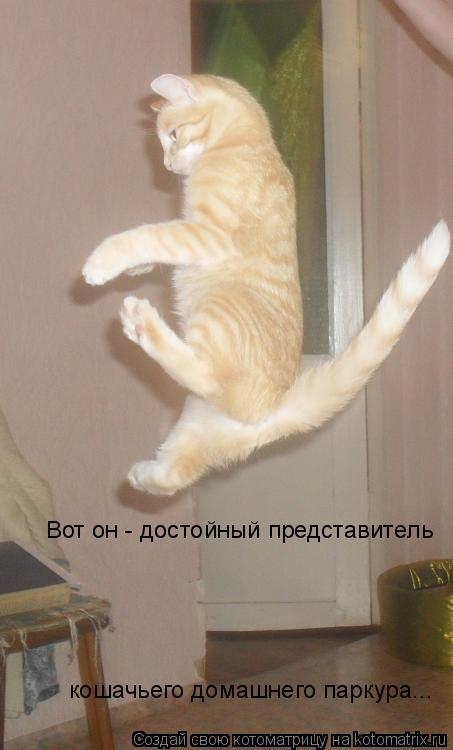 Котоматрица: Вот он - достойный представитель кошачьего домашнего паркура...