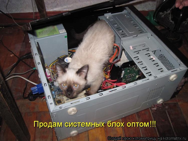 Котоматрица: Продам системных блох оптом!!!