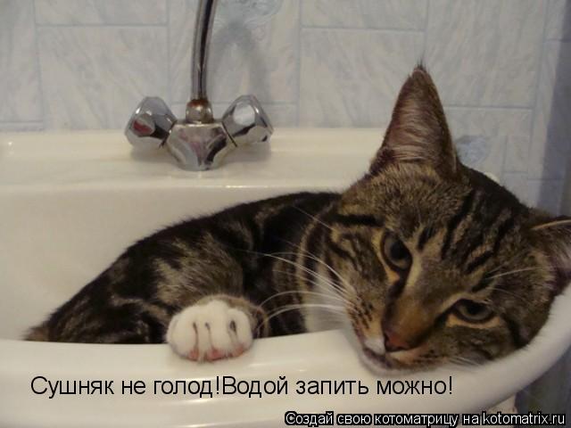 Котоматрица: Сушняк не голод!Водой запить можно!