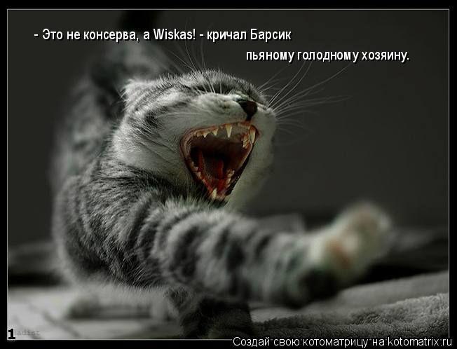 Котоматрица: - Это не консерва, а Wiskas! - кричал Барсик  пьяному голодному хозяину.