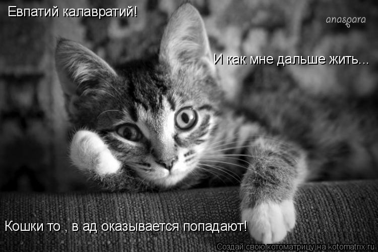 Котоматрица: Евпатий калавратий! И как мне дальше жить... Кошки то , в ад оказывается попадают!