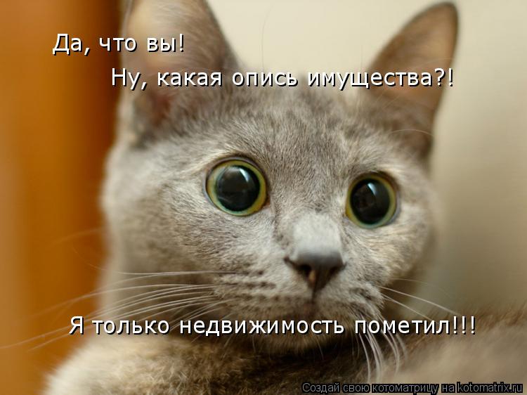 Котоматрица: Да, что вы!  Ну, какая опись имущества?! Я только недвижимость пометил!!!