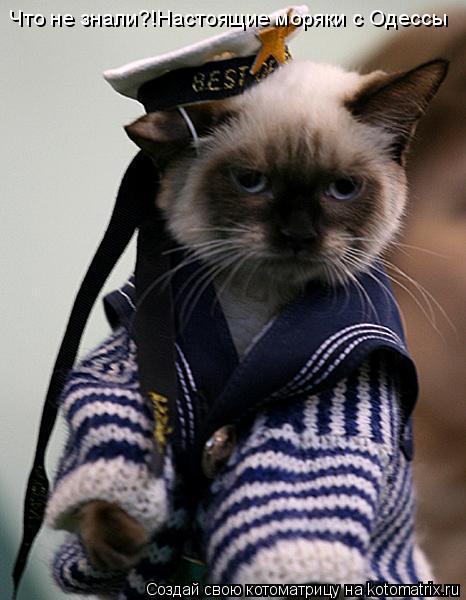 Котоматрица: Что не знали?!Настоящие моряки с Одессы