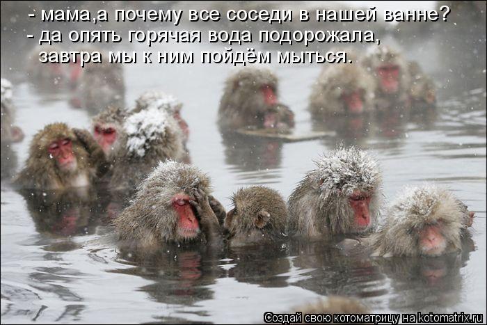 Котоматрица: - мама,а почему все соседи в нашей ванне? - да опять горячая вода подорожала, завтра мы к ним пойдём мыться.