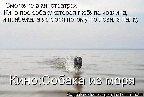 Котоматрица: Смотрите в кинотеатрах! Кино про собаку,которая любила хозяина, и прибежала из моря,потомучто ловила палку Кино:Собака из моря