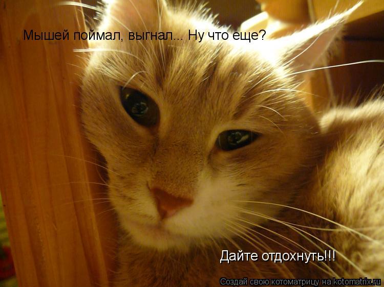 Котоматрица: Мышей поймал, выгнал... Ну что еще? Дайте отдохнуть!!!