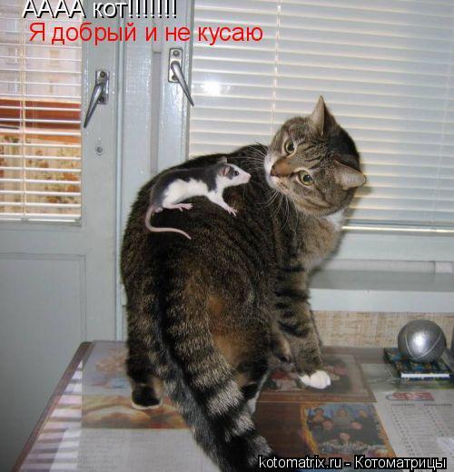 Котоматрица: АААА кот!!!!!!! Я добрый и не кусаю