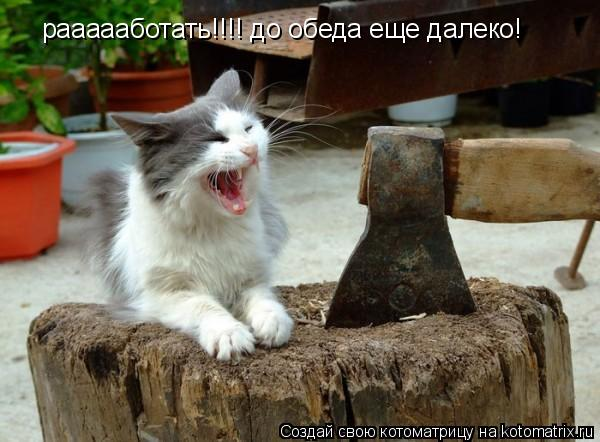 Котоматрица: раааааботать!!!! до обеда еще далеко!
