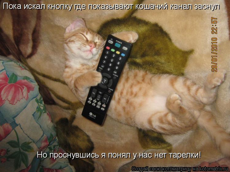 Котоматрица: Пока искал кнопку где показывают кошачий канал заснул Но проснувшись я понял у нас нет тарелки!
