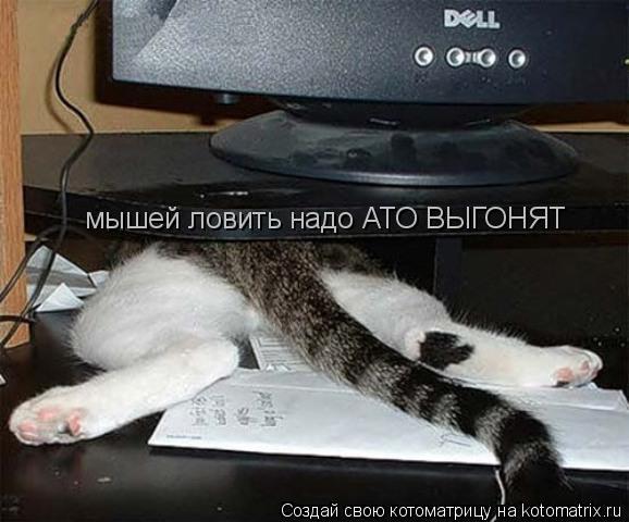 Котоматрица: мышей ловить надо АТО ВЫГОНЯТ