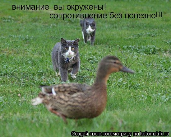 Котоматрица: внимание, вы окружены!  сопротивление без полезно!!!