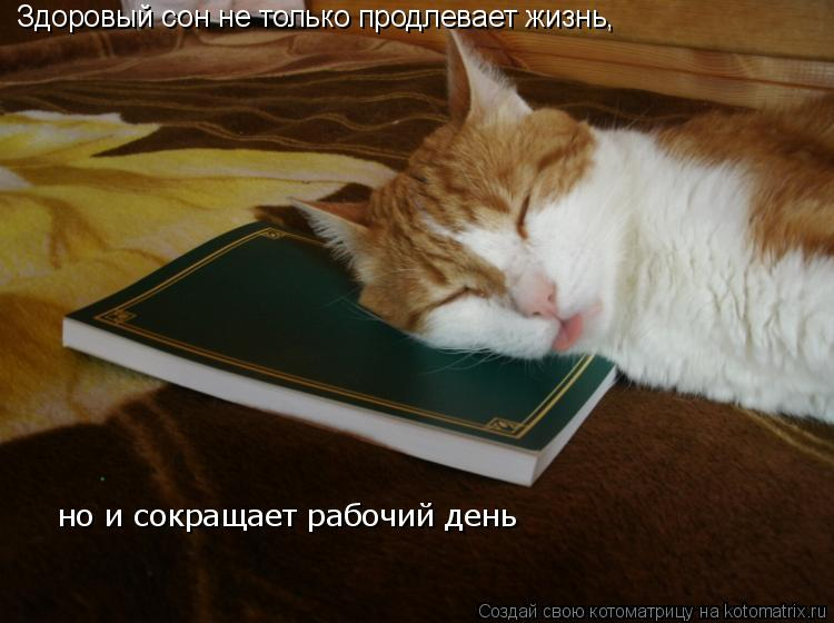 Котоматрица: Здоровый сон не только продлевает жизнь, но и сокращает рабочий день