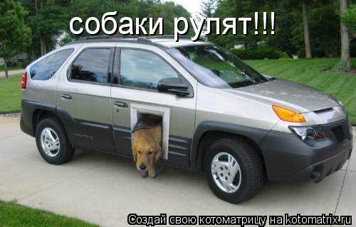 Котоматрица: собаки рулят!!!