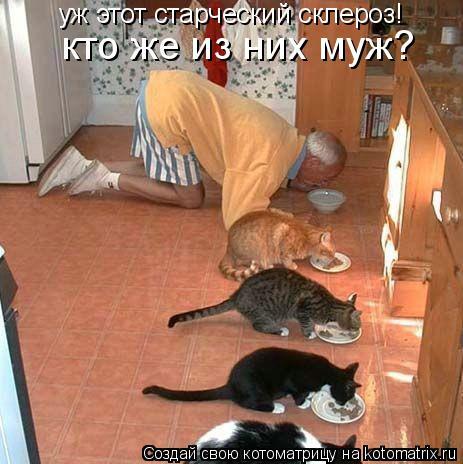 Котоматрица: уж этот старческий склероз! кто же из них муж?