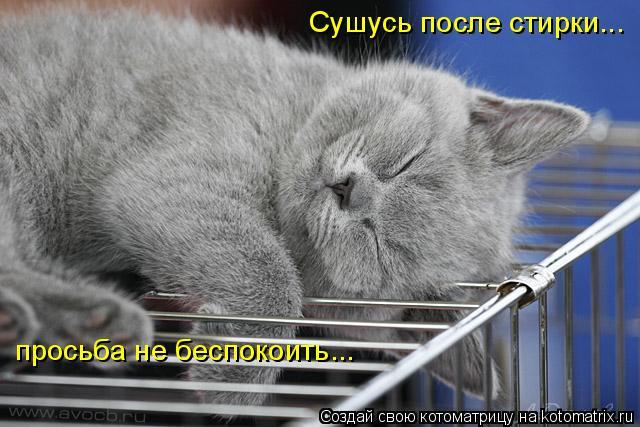 Котоматрица: Сушусь после стирки... просьба не беспокоить...