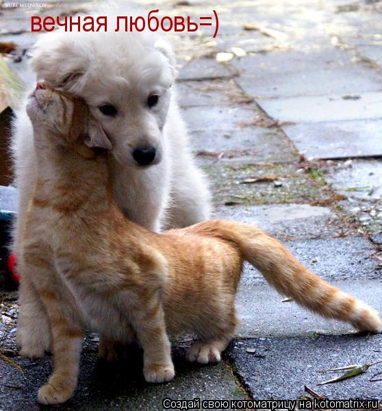 Котоматрица: вечная любовь=)