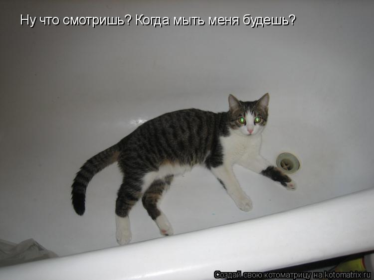Котоматрица: Ну что смотришь? Когда мыть меня будешь?