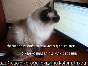 Котоматрица: На запрос: сайт знакомств для кошек Яндекс выдал 12 млн страниц...
