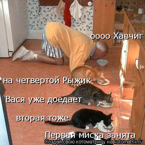 Котоматрица: Первая миска занята вторая тоже на четвертой Рыжик Вася уже доедает оооо Хавчиг