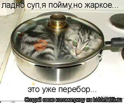 Котоматрица: ладно суп,я пойму,но жаркое... это уже перебор...