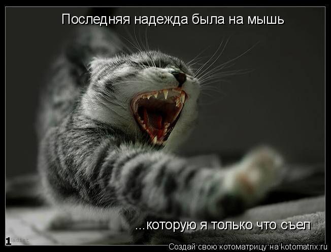 Котоматрица: Последняя надежда была на мышь ...которую я только что съел