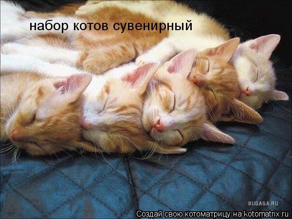 Котоматрица: набор котов сувенирный