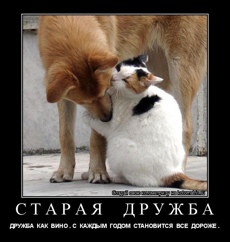 Котоматрица: старая  дружба ДРУЖБА  КАК  ВИНО . С  КАЖДЫМ  ГОДОМ  СТАНОВИТСЯ  ВСЕ  ДОРОЖЕ .