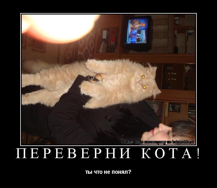 Котоматрица: переверни кота! ты что не понял?