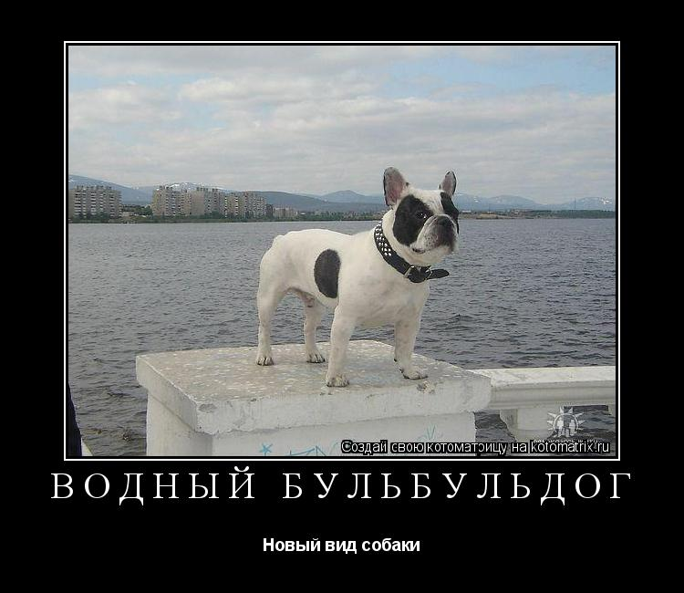 Котоматрица: Водный бульбульдог Новый вид собаки