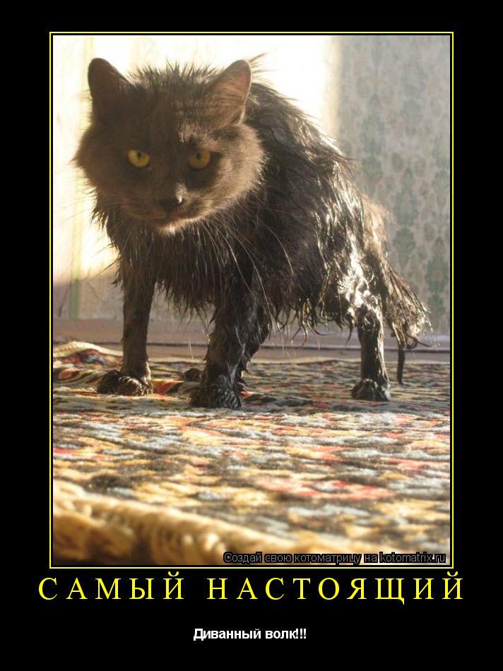 Котоматрица: САМЫЙ НАСТОЯЩИЙ Диванный волк!!!