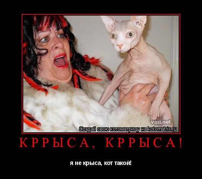 Котоматрица: кррыса, кррыса! я не крыса, кот такой!