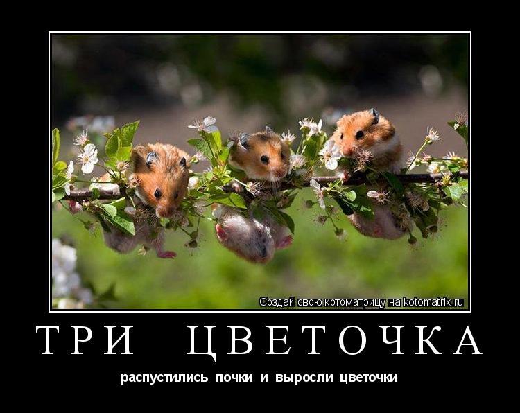Котоматрица: три  цветочка распустились  почки  и  выросли  цветочки