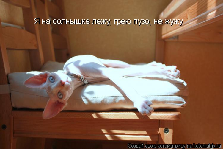Котоматрица: Я на солнышке лежу, грею пузо, не жужу