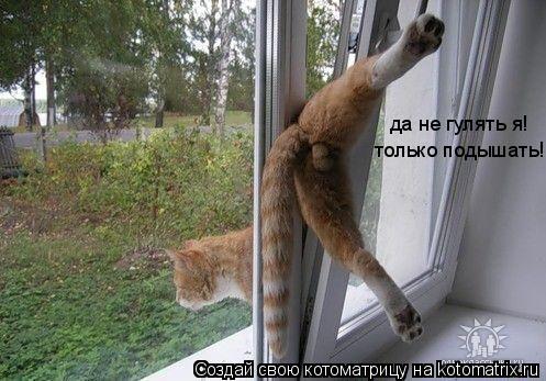 Котоматрица: да не гулять я!  только подышать!