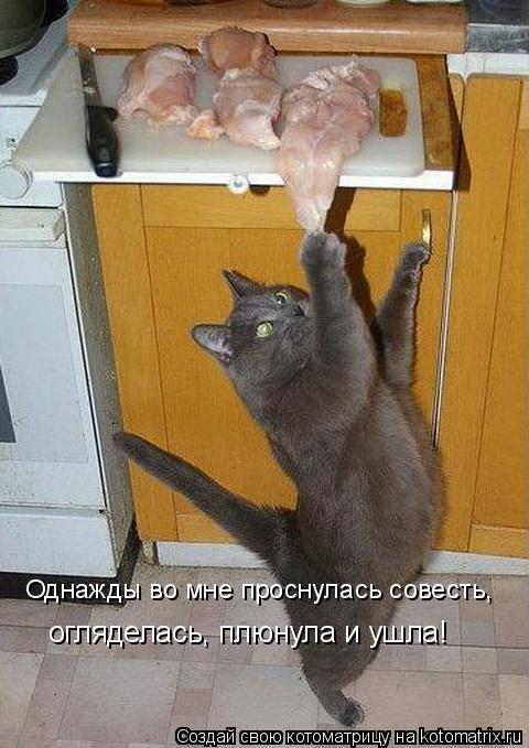 Котоматрица: Однажды во мне проснулась совесть,  огляделась, плюнула и ушла!
