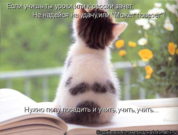 Котоматрица: Если учишь ты уроки,или к сессии зачет, Не надейся на удачу,или,'Может повезет'! Нужно попу посадить и учить,учить,учить...