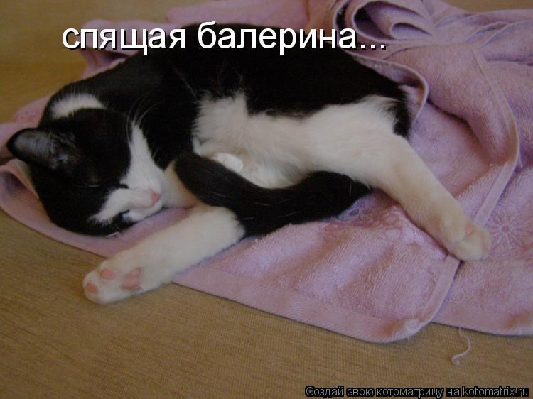 Котоматрица: спящая балерина...