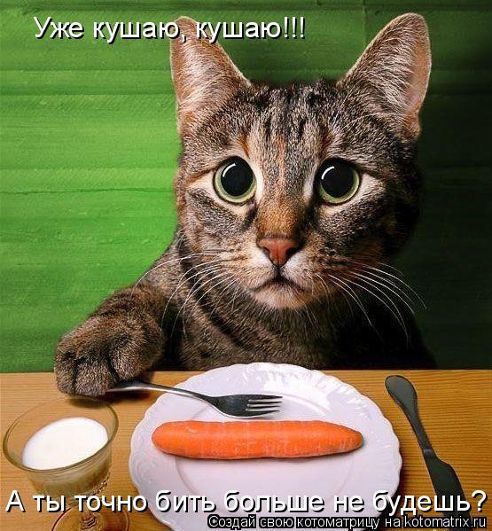 Котоматрица: Уже кушаю, кушаю!!! А ты точно бить больше не будешь?
