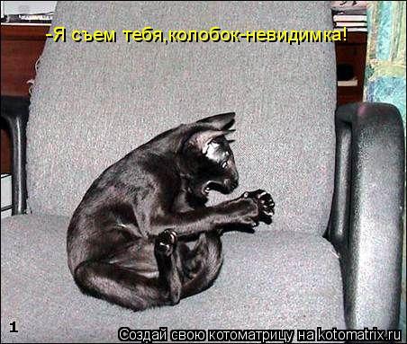 Котоматрица: -Я съем тебя,колобок-невидимка!