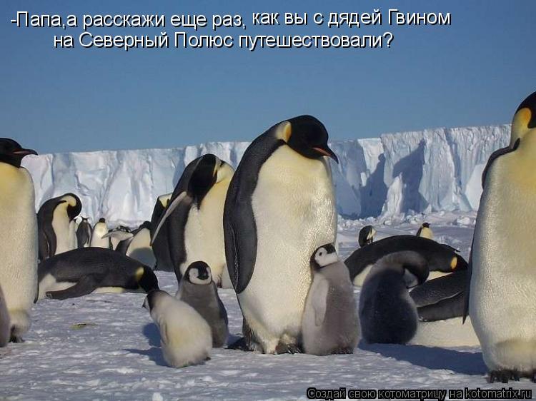 Котоматрица: -Папа,а расскажи еще раз, как вы с дядей Гвином  на Северный Полюс путешествовали?