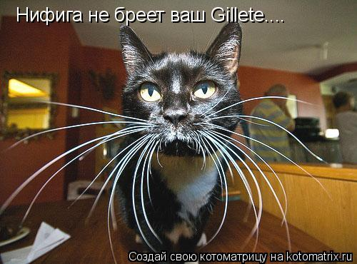 Котоматрица: Нифига не бреет ваш Gillete....