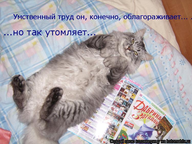 Котоматрица: Умственный труд он, конечно, облагораживает... ...но так утомляет... ...но так утомляет...
