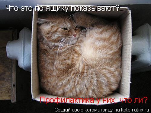 Котоматрица: Что это по ящику показывают? Профилактика у них, что ли?