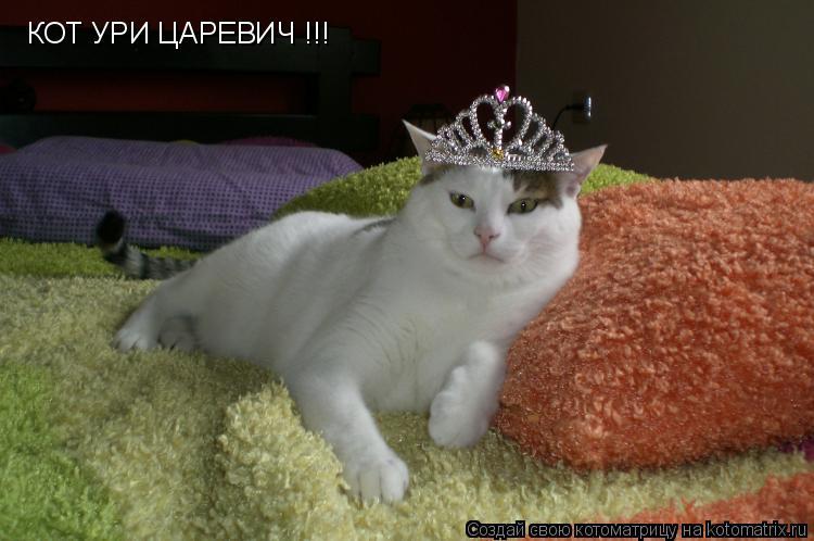 Котоматрица: КОТ УРИ ЦАРЕВИЧ !!!