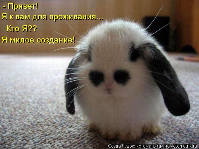 Котоматрица: - Привет! Я к вам для проживания... Кто Я?? Я милое создание!
