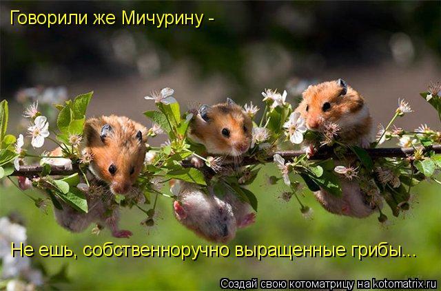 Котоматрица: Говорили же Мичурину -  Не ешь, собственноручно выращенные грибы...