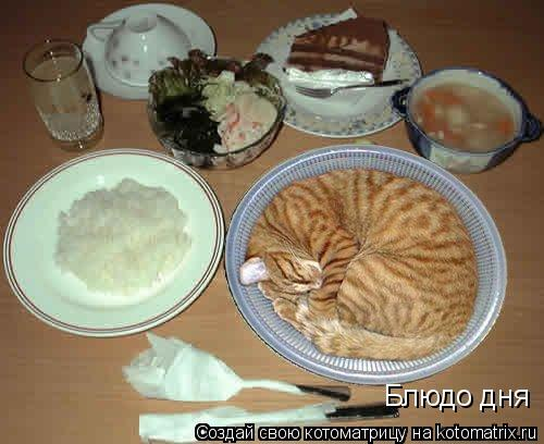 Котоматрица: Блюдо дня