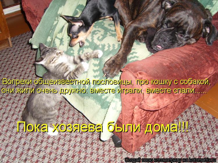 Котоматрица: Вопреки общеизвестной пословицы, про кошку с собакой,  они жили очень дружно: вместе играли, вместе спали….....   Пока хозяева были дома!!!